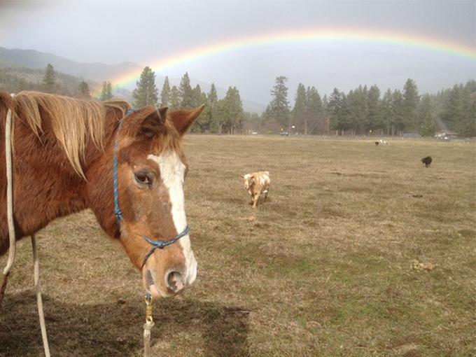 horse.rainbow
