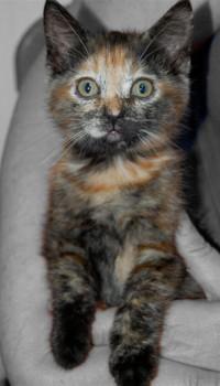 kitten.bw