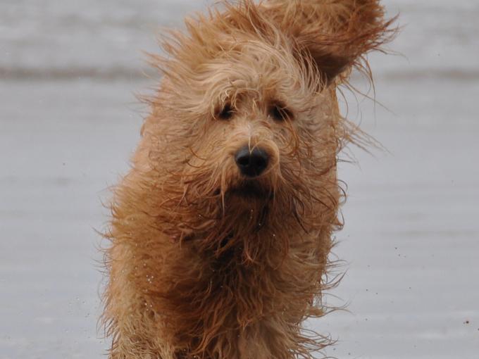 wetdog